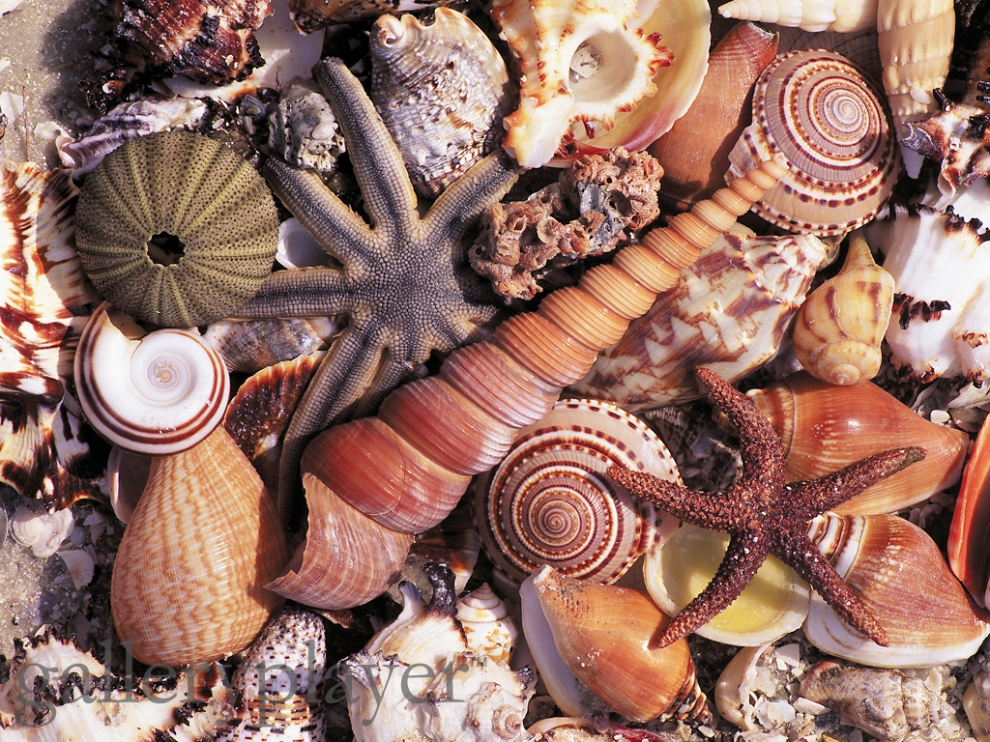 Variety of Seashells