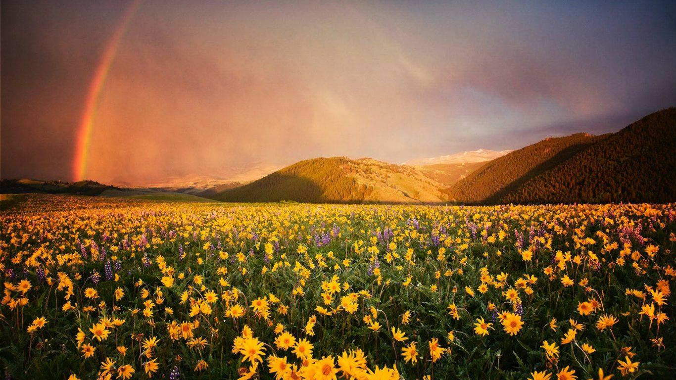 Rainbow Meadows Mountains Forest Rain Prairie Green Flowers Field